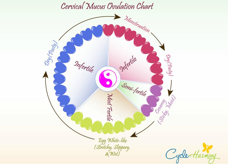 cervical mucus ovulation chart